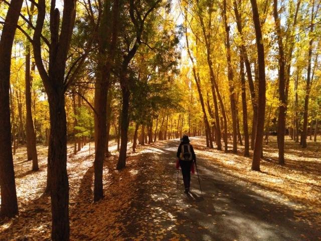 bosque-de-otono-camino